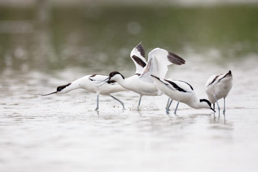 photographe-nature-cecile-terrasse-french-wildlife-photographer-560-13