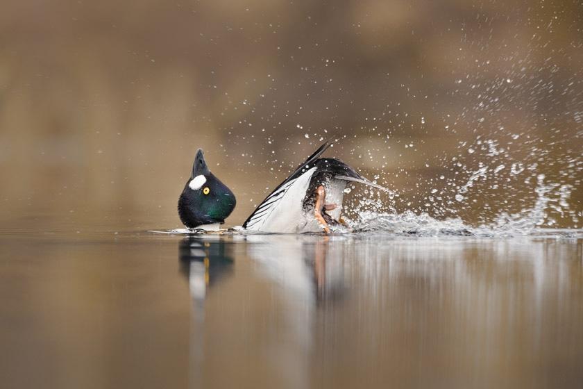 photographe-nature-cecile-terrasse-french-wildlife-photographer-560-15