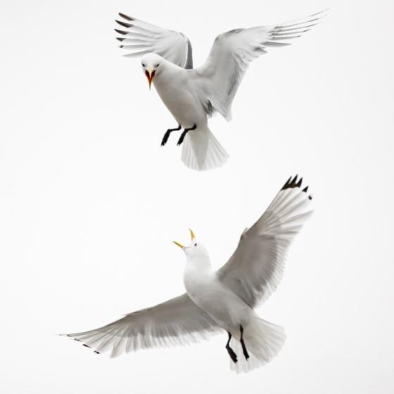 photographe-nature-cecile-terrasse-french-wildlife-photographer-560-18