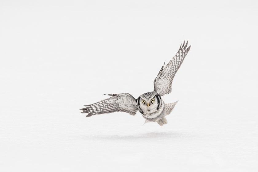 photographe-nature-cecile-terrasse-french-wildlife-photographer-560-21