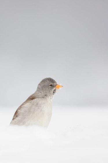 photographe-nature-cecile-terrasse-french-wildlife-photographer-560-23