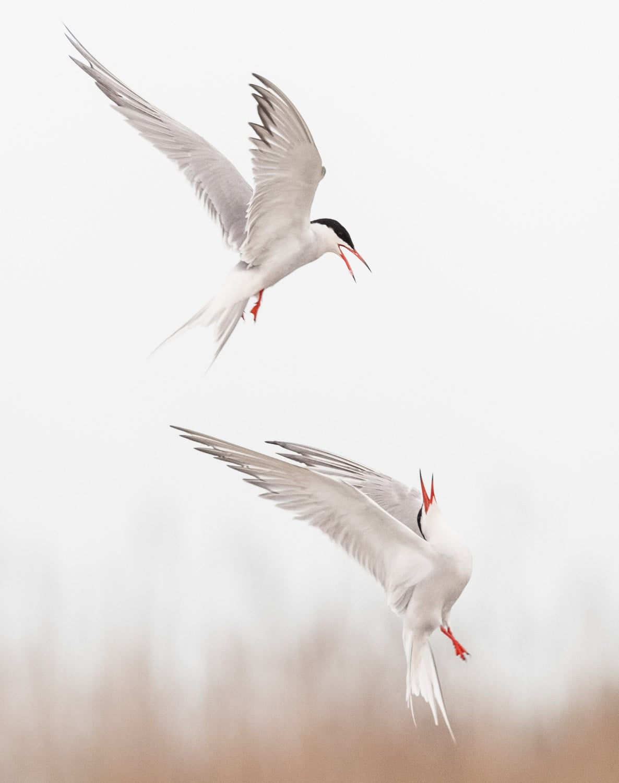 photographe-nature-cecile-terrasse-french-wildlife-photographer-560-25
