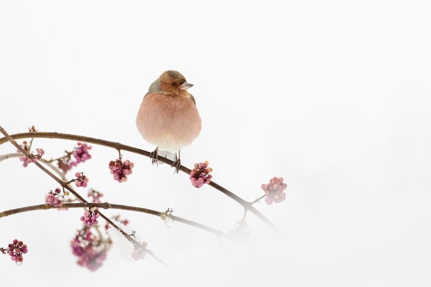 photographe-nature-cecile-terrasse-french-wildlife-photographer-560-3