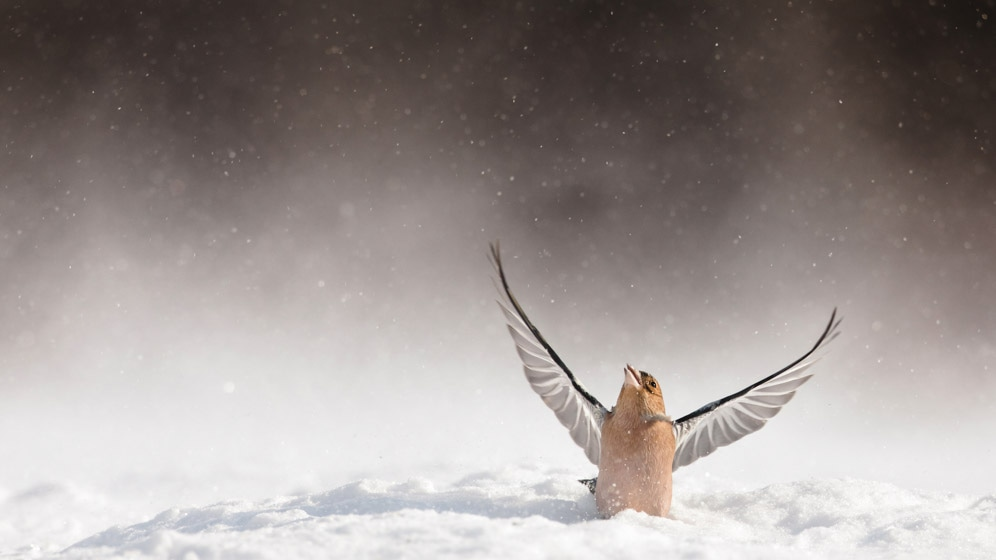 photographe-nature-cecile-terrasse-french-wildlife-photographer-560-4