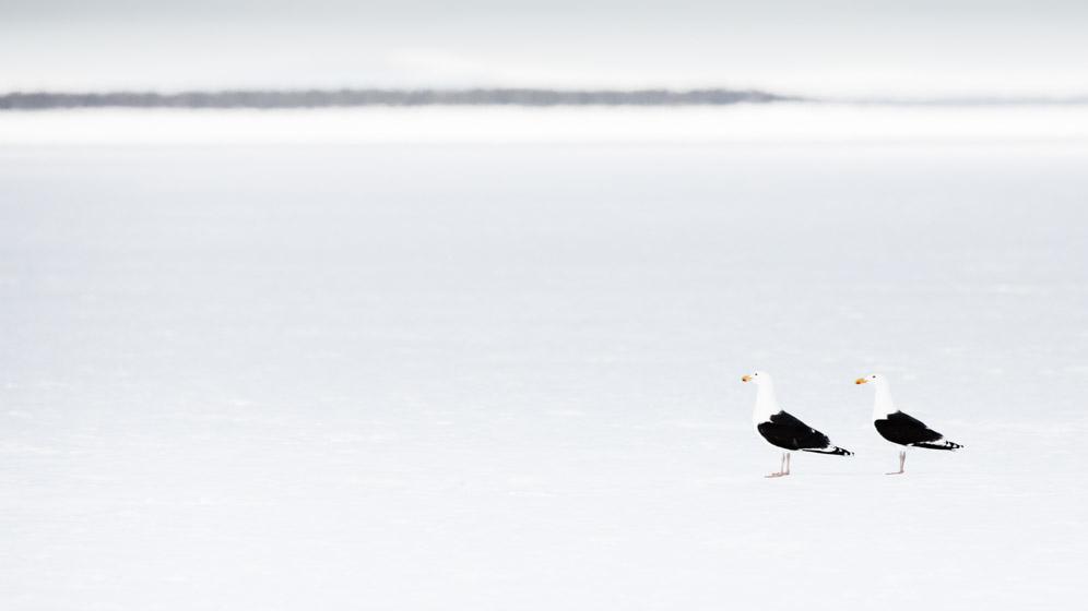 photographe-nature-cecile-terrasse-french-wildlife-photographer-560-5