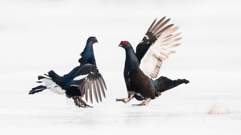 photographe-nature-cecile-terrasse-french-wildlife-photographer-560-6