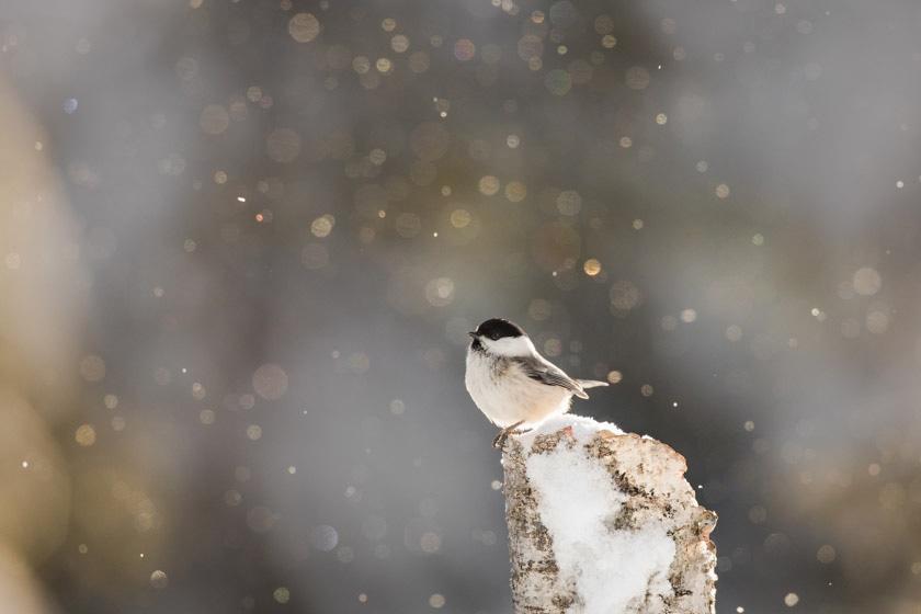 photographe-nature-cecile-terrasse-french-wildlife-photographer-560-8